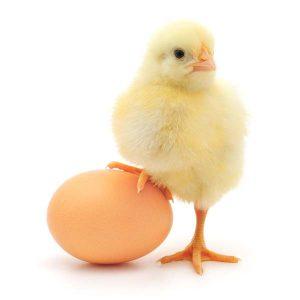 """домашний инкубатор для яиц """"Идеальная наседка"""" на 63 яйца с механическим повотором яиц"""